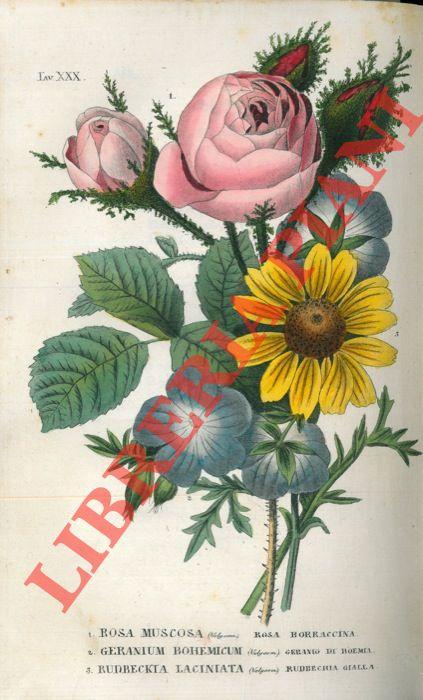 L'antotrofia ossia la coltivazione de' fiori.