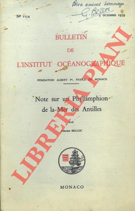 Note sur un Phyllamphion de la Mer des Antilles.